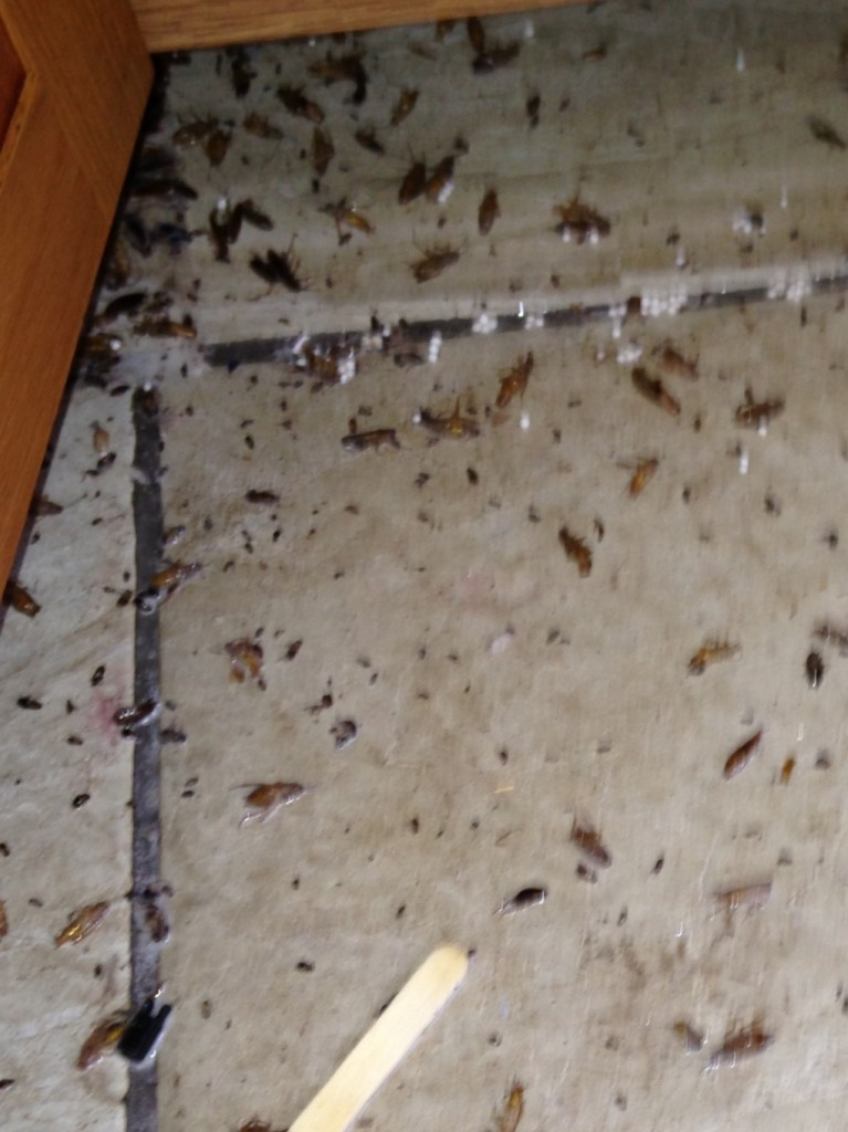 Cockroaches In High End Building Action Pest Control Services Inc