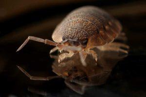 Pest control in Mississauga