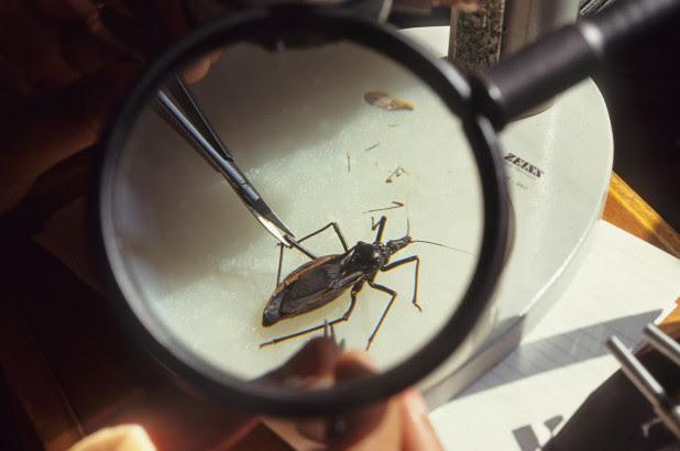 Pest control Ontario