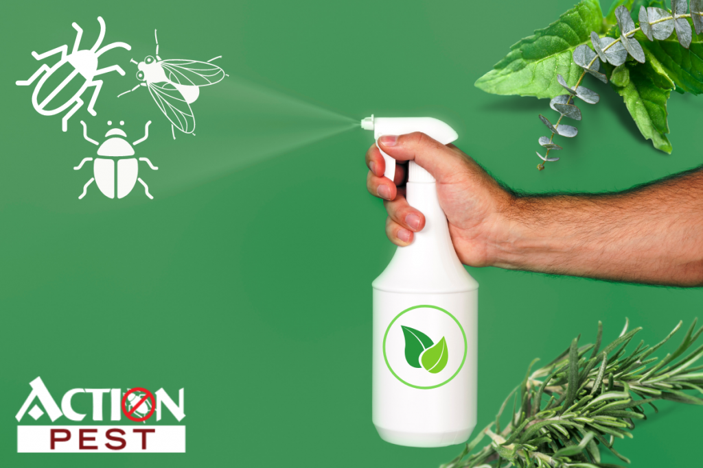 This image shows a white spray bottle along with mint, eucalyptus, and rosemary for natural pest control remedies.